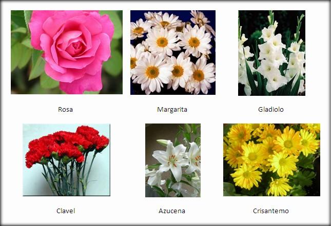 2 b my classroom - Clase de flores y sus nombres ...