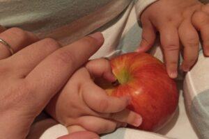 Manos de un bebé tocando una manzana junto a las manos de un adulto